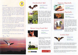 Bat leaflet side 2jpeg