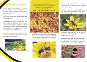 Bee leaflet side 2e